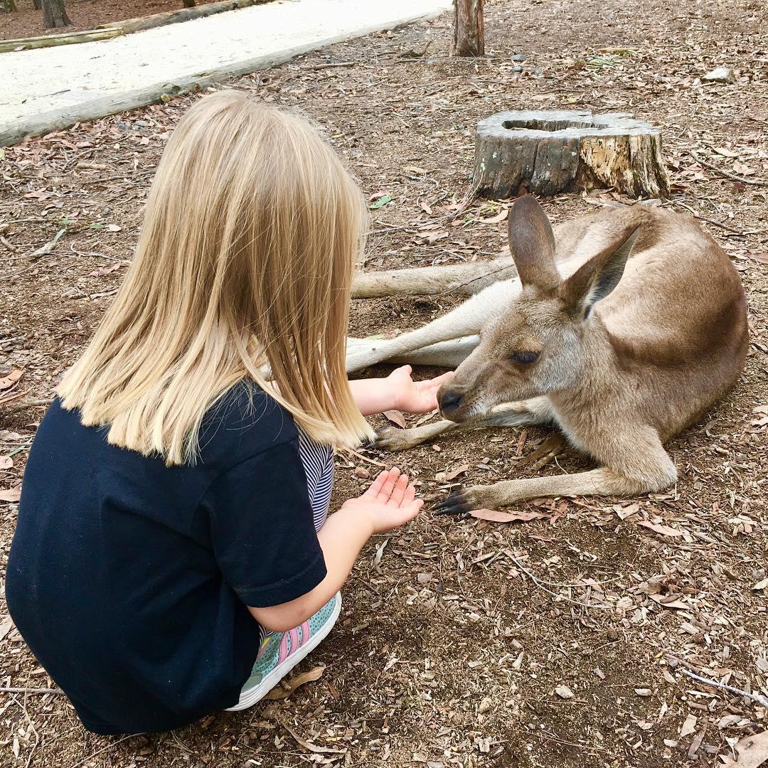 Tierli fetere! kangaroo feeding rauszeit